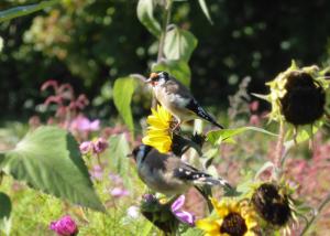 Stieglitz Global Gardening